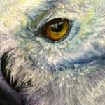 Snow Owl Face - Original Oil Painting