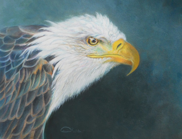 """Planing Piracy"", Bald Eagle Original Prismacolor Artwork by Allison Richter"