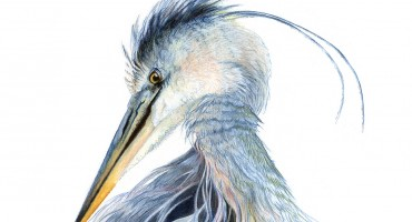 Blue Heron Artwork