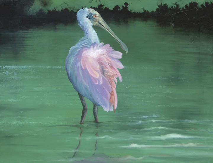 """On the Flip-side"" - Roseate Spoonbill oil on canvas by Allison Richter"