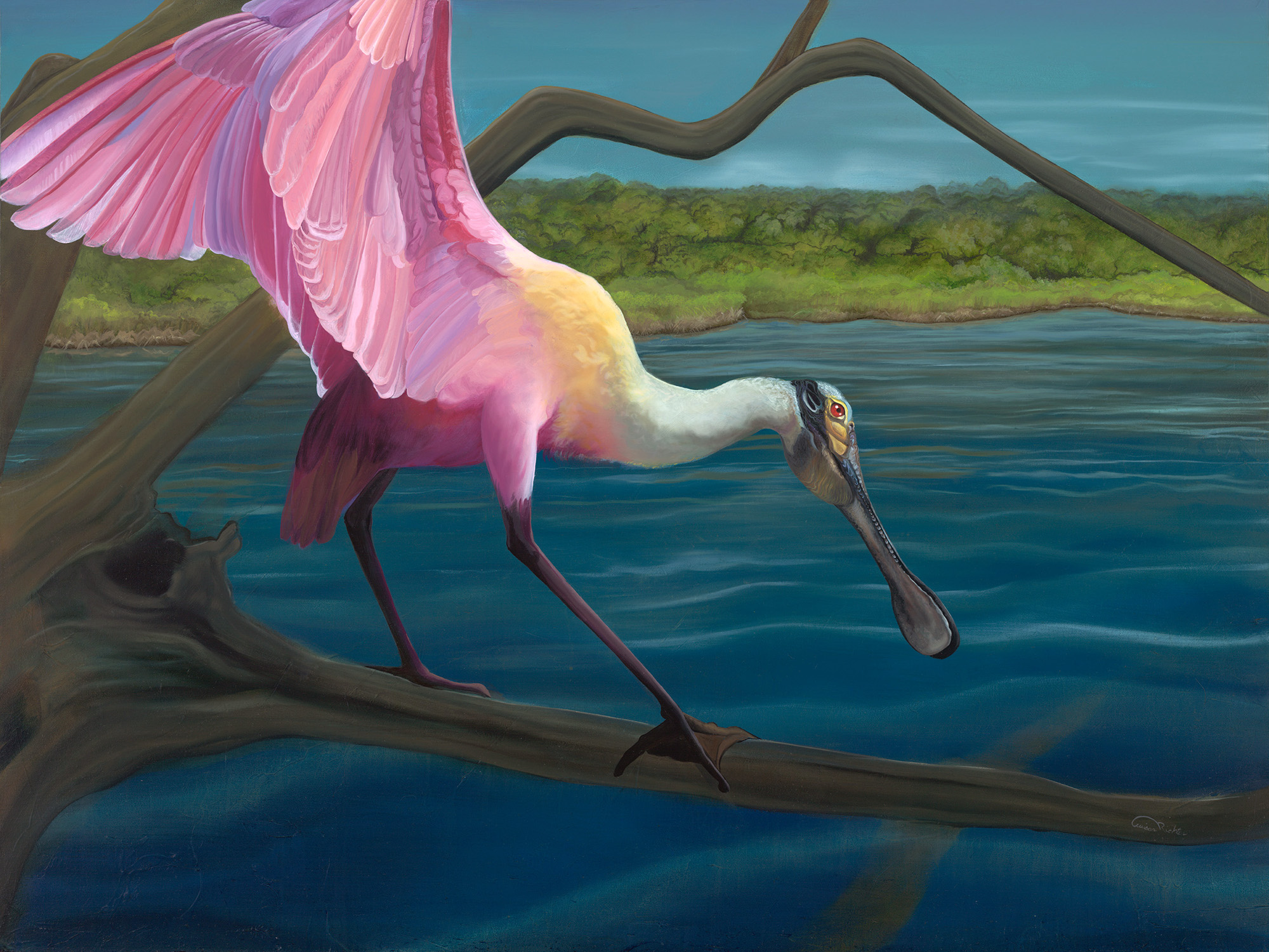 """Swagger"" - Roseate Spoonbill lighting on a mangrove branch - an oil painting original artwork by professional artist Allison Richter"