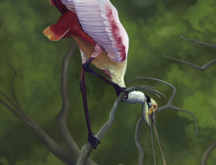 """Twisted Point of View"" - Roseate Spoonbill oil on canvas by Allison Richter"