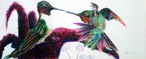 Feelin' Froggy Male Ruby Throat Hummingbirds Original Artwork by Allison Richter