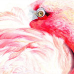 """Tucking In"" Pink Flamingo Original Artwork Artist Signed Prints for Sale"