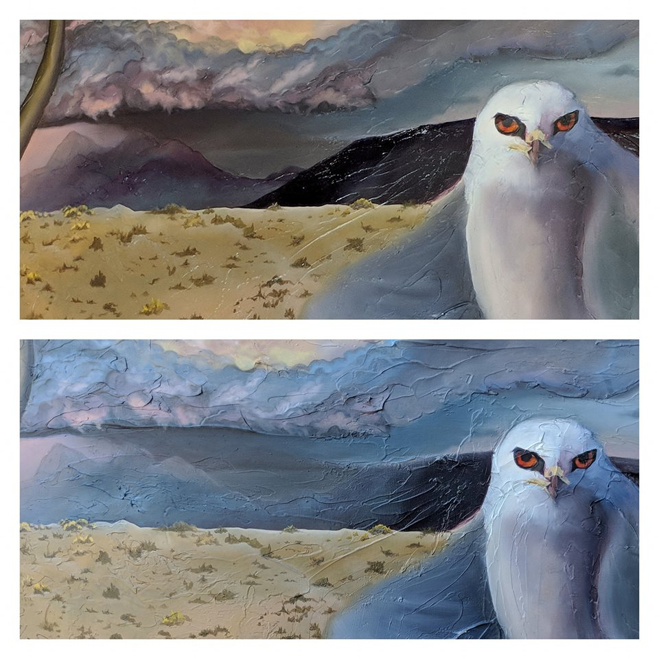 White-tail Kite Oil Painting in Progress - updating background mountains