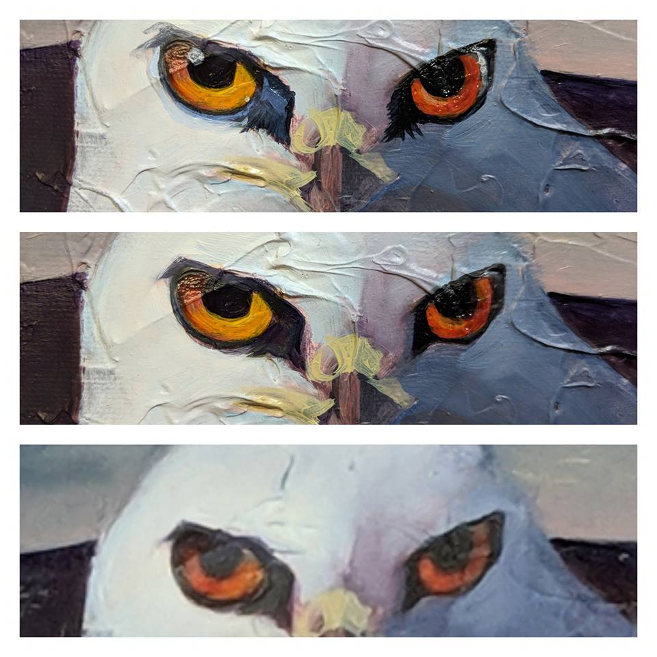 White-tail Kite Oil Painting in Progress - beginning of eye details on the bird art